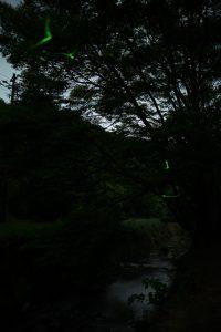 Lr_DSC_0036