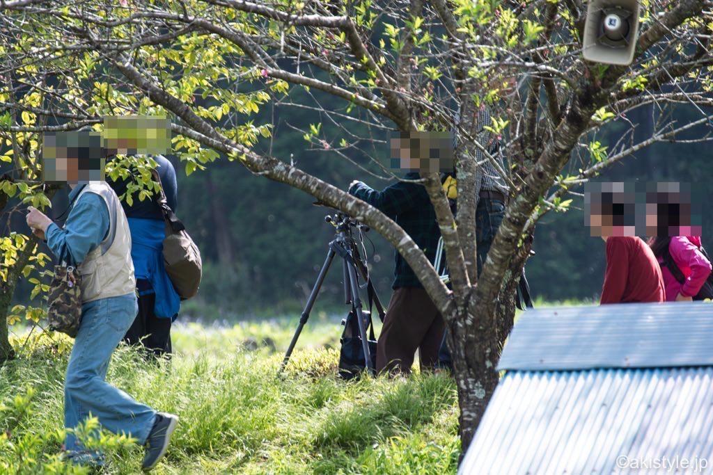 大淵笹場の悪質カメラマン