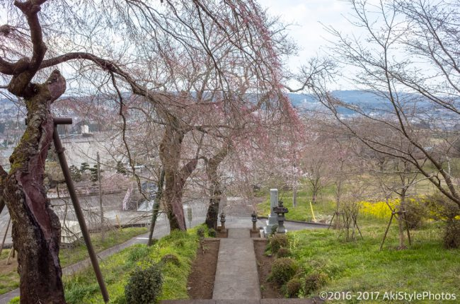 桜には疎い僕が撮影した、富士山の見える桜スポットまとめ2017