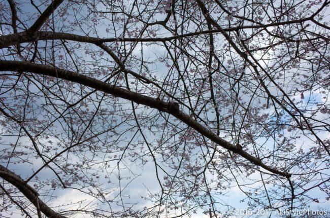三度目のドクターイエローのち春の訪れ、時々カメラマンのエゴ