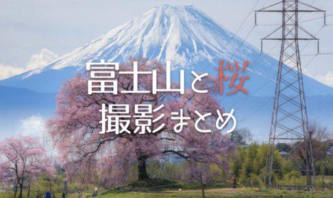 先照寺の枝垂れ桜と富士山、道中に見かけた潤井川の桜並木が圧巻だった話