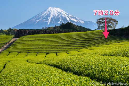 茶畑の表情の変化が楽しい!今宮と大淵笹場で新芽を狙った結果