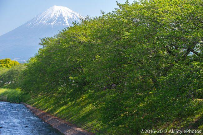 季節ものに疎い僕が撮影した、GW前後に狙える新緑と富士山まとめ2017