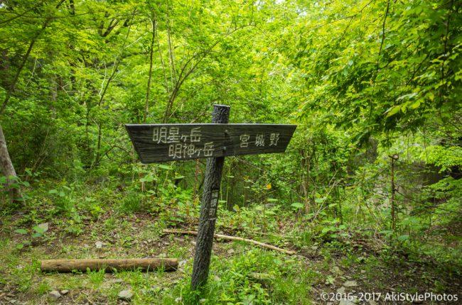 金時山から明神ヶ岳まで新緑ハイキング!低山ながらボリューム満点