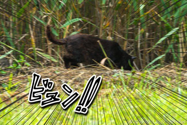 雨上がりに見た笠雲富士山と、田貫湖のホタルとさくら猫の話