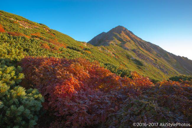 紅葉に染まる秋の北岳