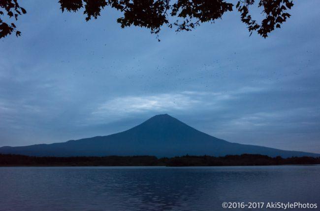 田貫湖からの富士山とカラス