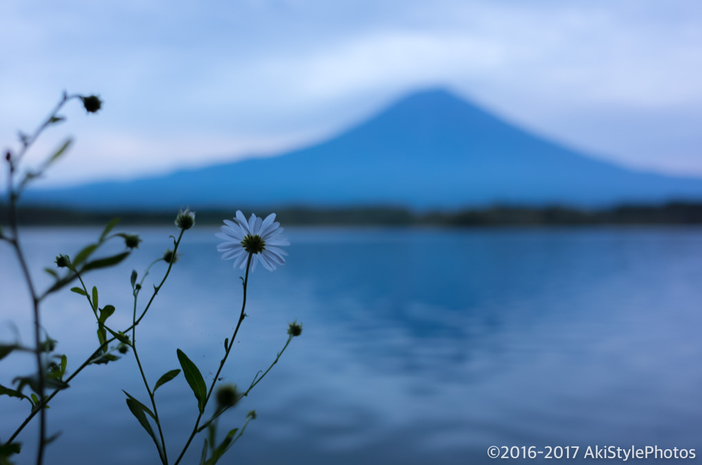 田貫湖からの富士山と花