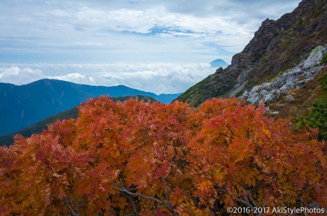 北岳から富士山とナナカマドの紅葉