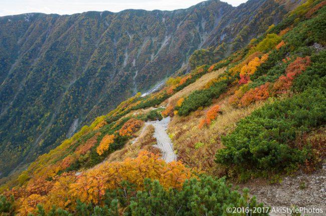 北岳の登山道の紅葉
