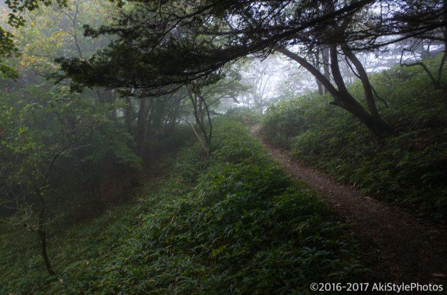 鳳凰三山の夜叉神ルート