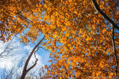 精進峠と三方分山の紅葉