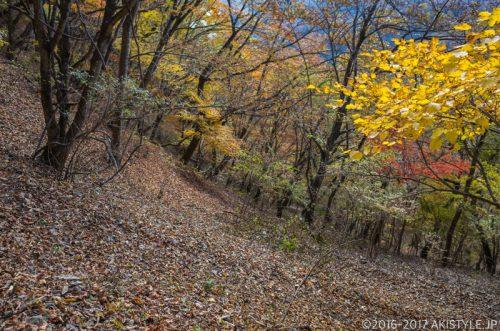 精進峠からの下山道