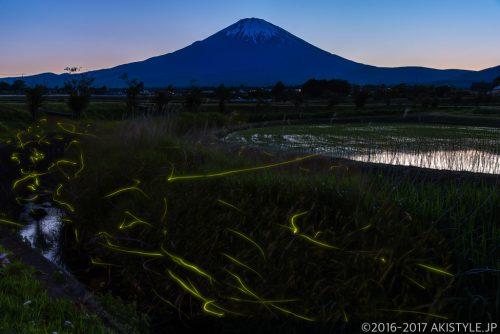 ホタルと富士山