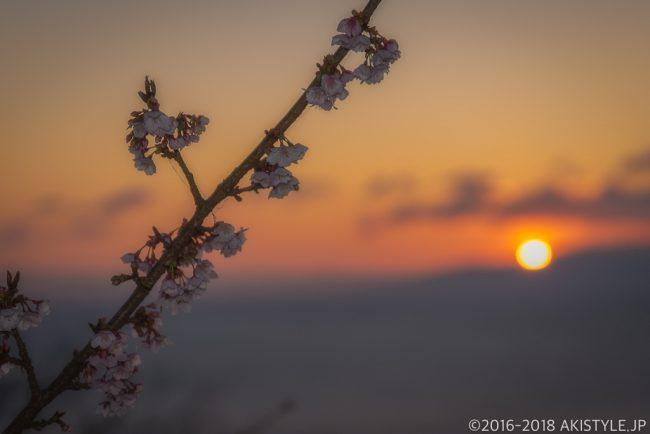 薄寒桜と日の出