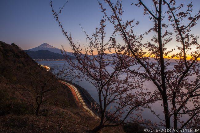 薩埵峠の薄寒桜と富士山と朝焼け
