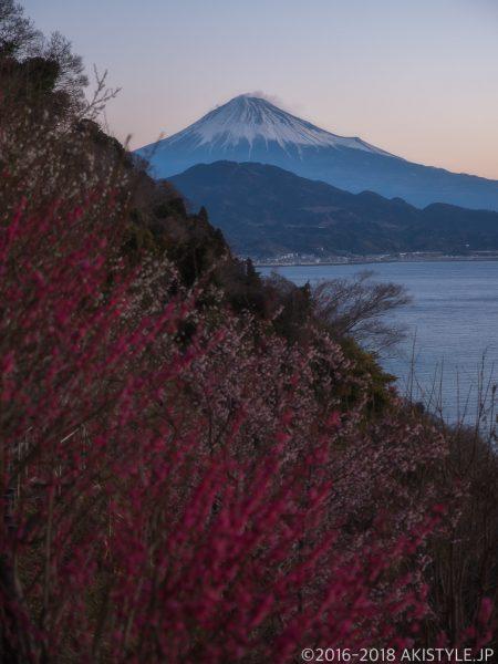 薩埵峠の梅の花と夜明けの富士山