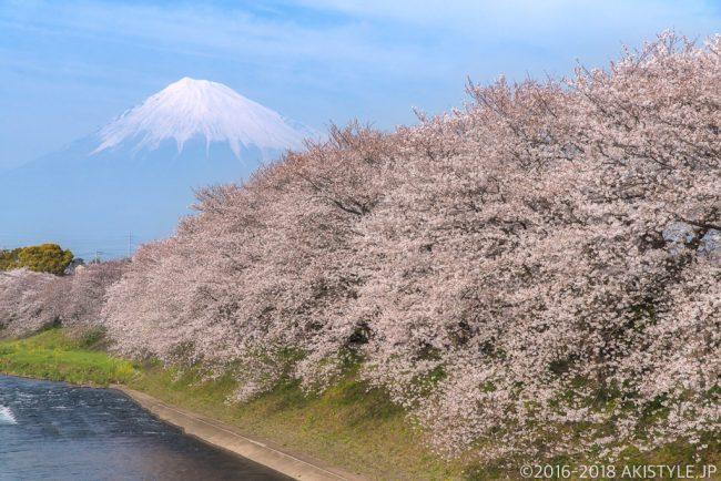富士市の龍巌淵の桜並木と富士山
