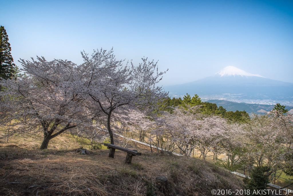富士市の桜と富士山
