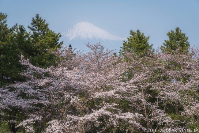 富士市内の桜と富士山