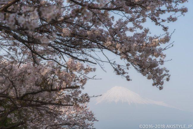 富士市の雁金堤の桜と富士山