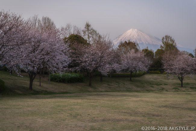 富士西公園の桜と富士山