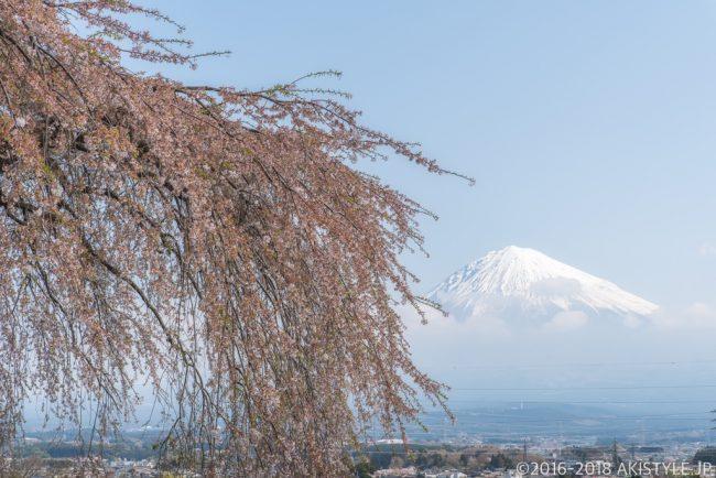 先照寺の枝垂れ桜と富士山