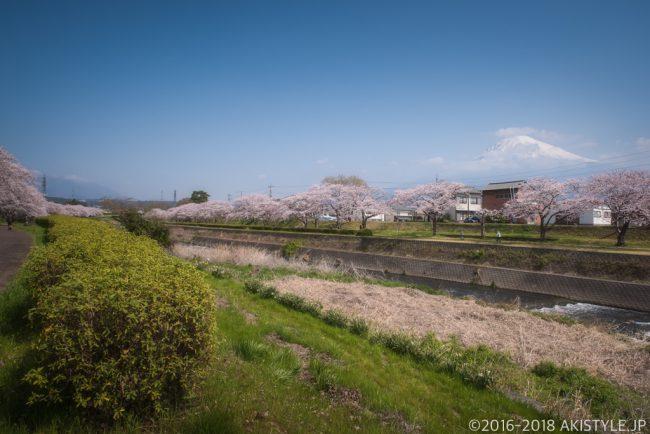 潤井川の桜並木と富士山