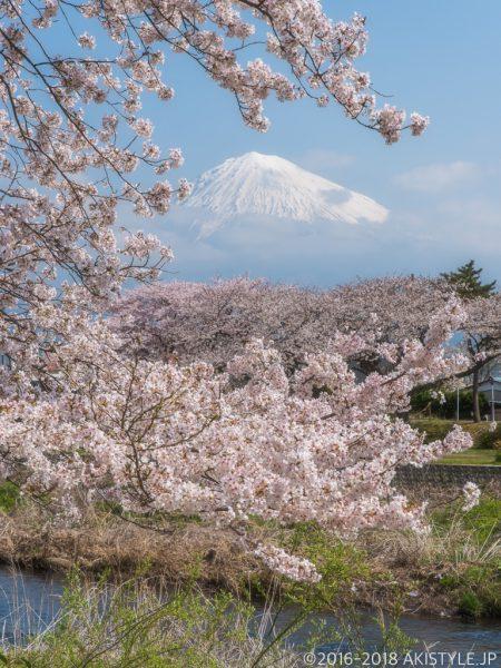 龍巌淵の桜並木と富士山