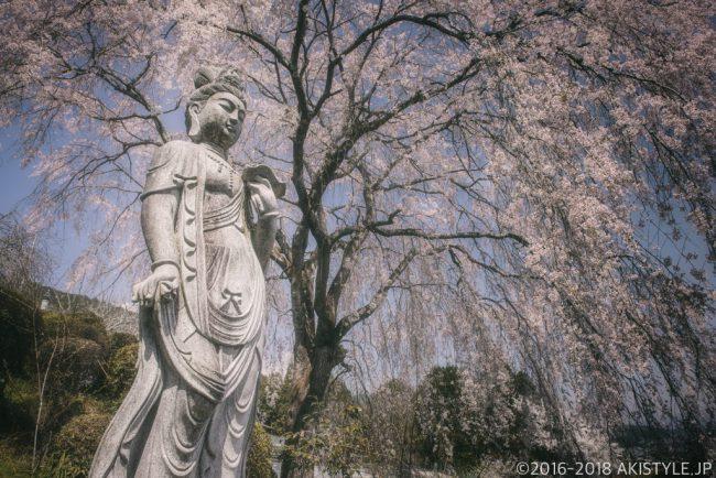 正法寺のシダレザクラと観音像