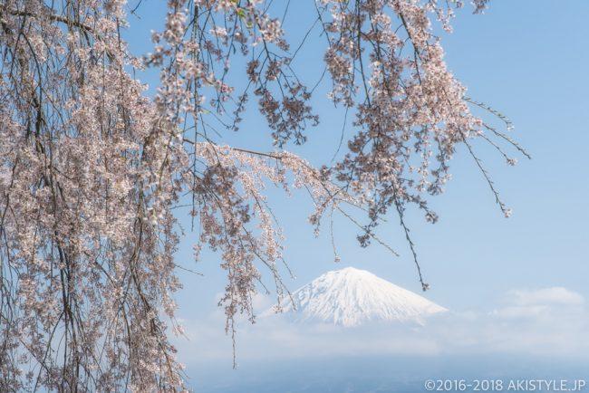 正法寺のシダレザクラと富士山