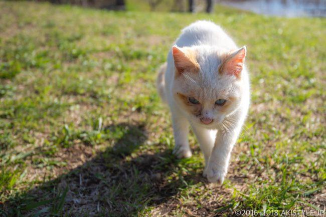 田貫湖の野良猫