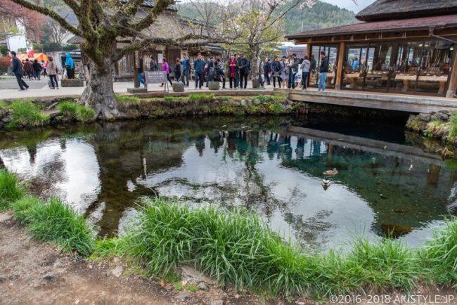 忍野八海の湧池