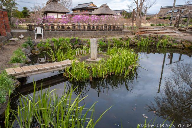 忍野八海、菖蒲池