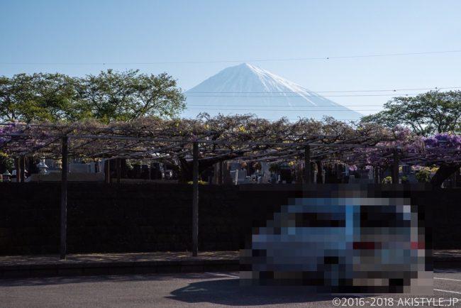 富士山と下之坊の藤の花