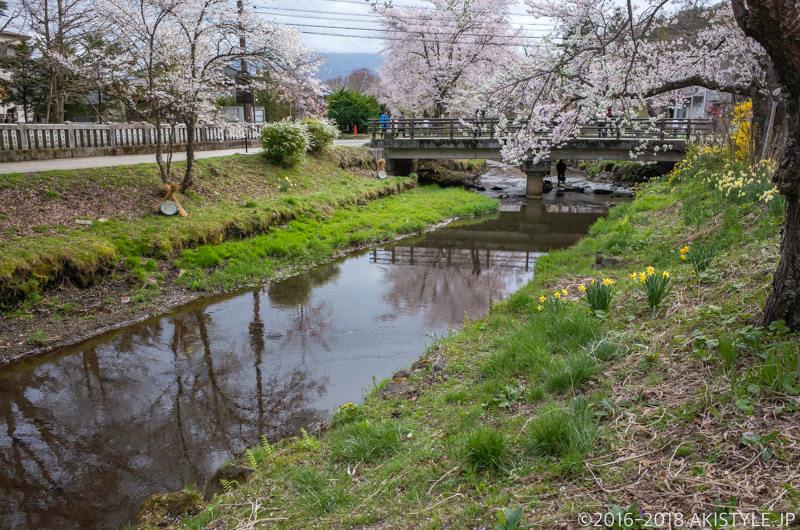 忍野八海、お宮橋と桜並木