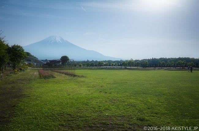 山中湖花の都公園の広場から見る富士山