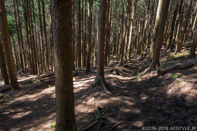 長者ヶ岳、田貫湖キャンプ場方面の登山道