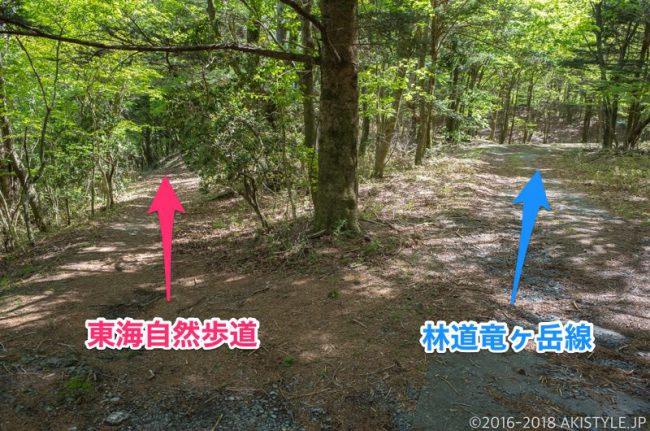 東海自然歩道と林道竜ヶ岳線の分岐