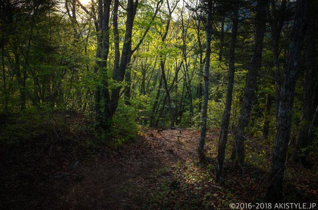 御坂峠から御坂山への登山道