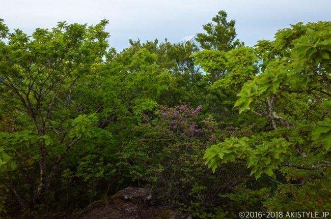 八丁山から見た富士山と新緑