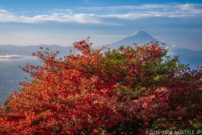 甘利山のヤマツツジと富士山