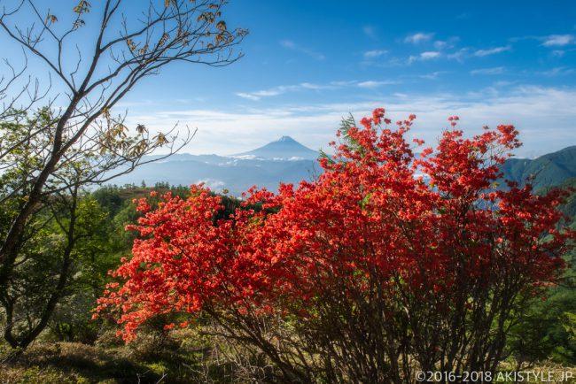 奥甘利山のヤマツツジと富士山