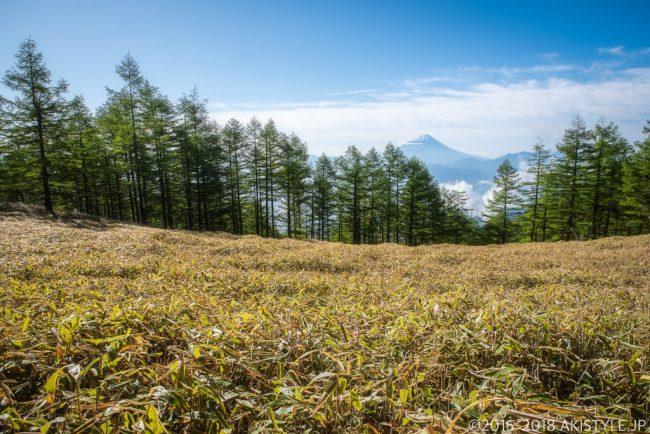 千頭星山の笹原と富士山