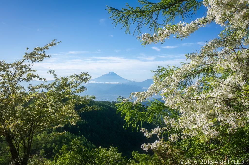 奥甘利山のズミの花と富士山