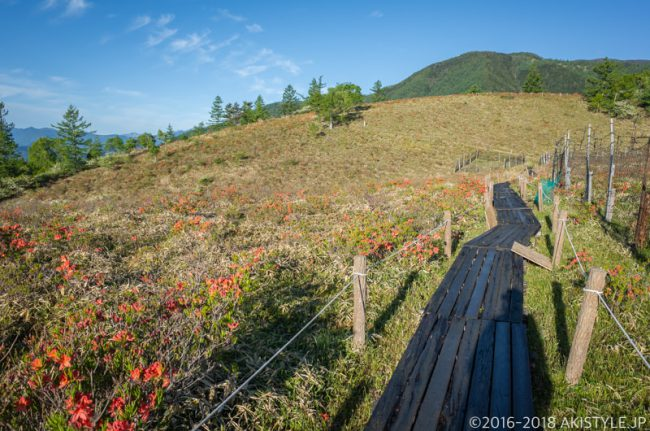甘利山の木道