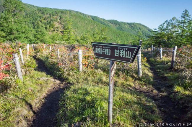 甘利山から千頭星山までの登山道