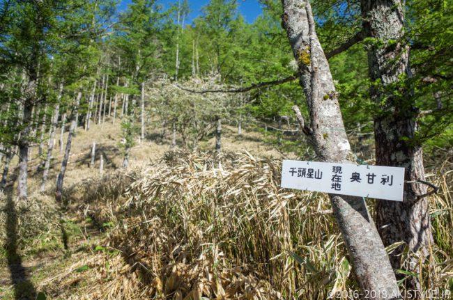 奥甘利山から千頭星山への登山道