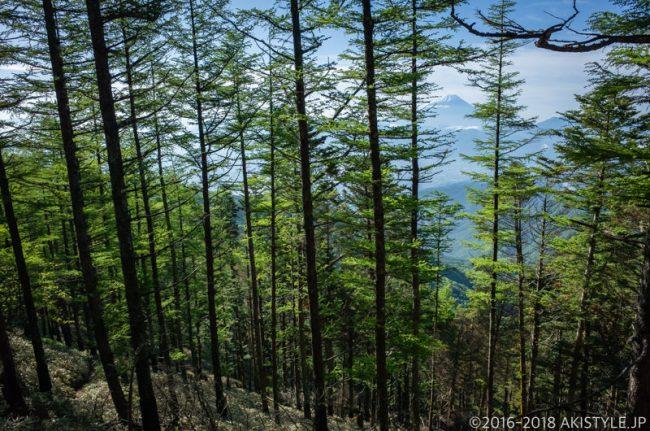 甘利山から千頭星山への登山道から見る富士山