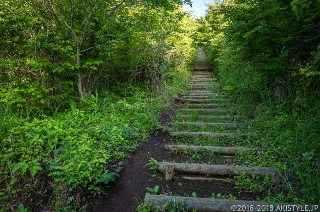 平尾山から大平山までの登山道